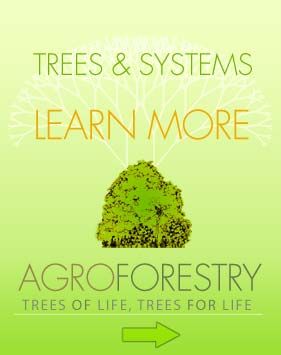 Learn More Agroforestry